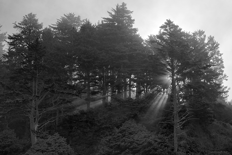 lincoln city trees