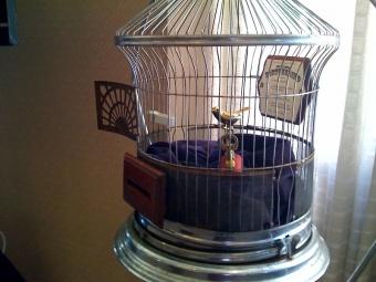 Bird Twitters Fortune